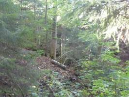 Erlach Open 2012 -031